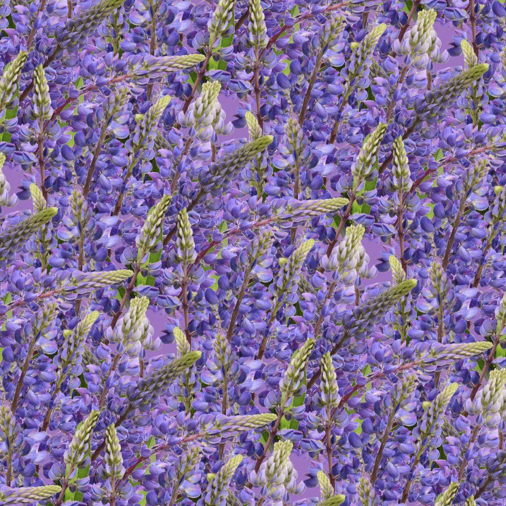 Blue Bonnet Flowers 22 Pattern
